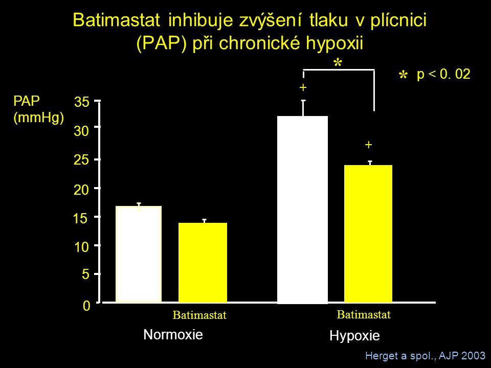 Batimastat inhibuje zvýšení tlaku v plícnici (PAP) při chronické hypoxii Hypoxie Normoxie PAP (mmHg) Batimastat 0 5 10 15 20 25 30 35 * p < 0. 02 * +