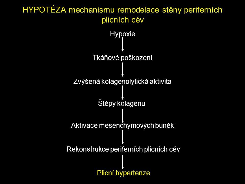 HYPOTÉZA mechanismu remodelace stěny periferních plicních cév Hypoxie Tkáňové poškození Zvýšená kolagenolytická aktivita Štěpy kolagenu Aktivace mesen