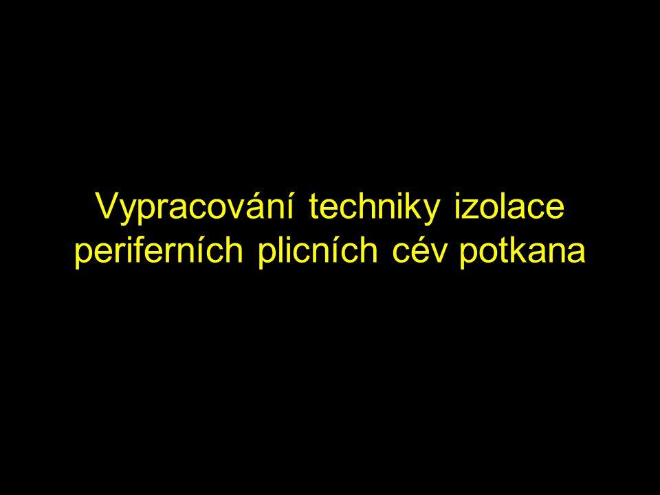 Vypracování techniky izolace periferních plicních cév potkana