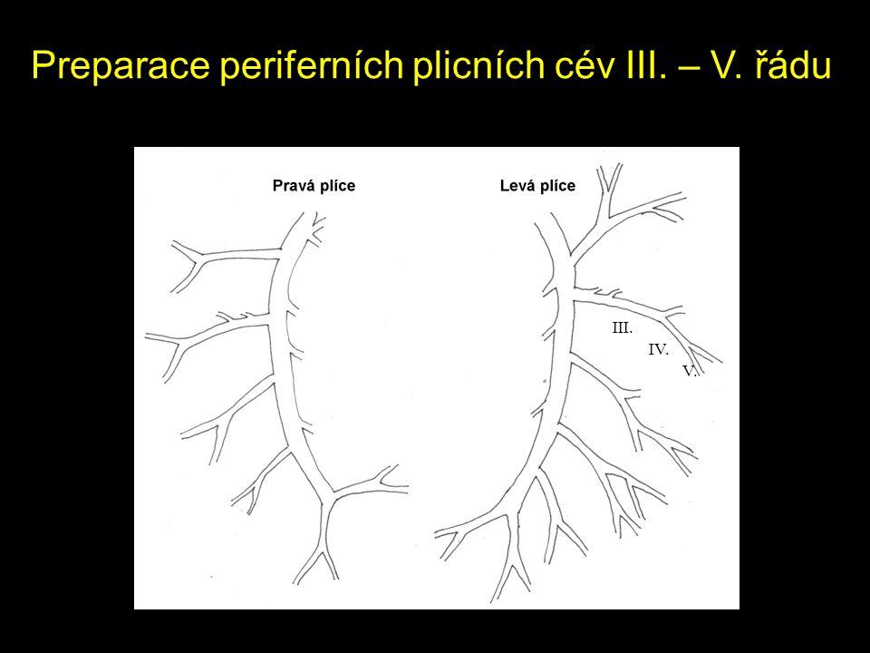 Preparace periferních plicních cév III. – V. řádu III. IV. V.