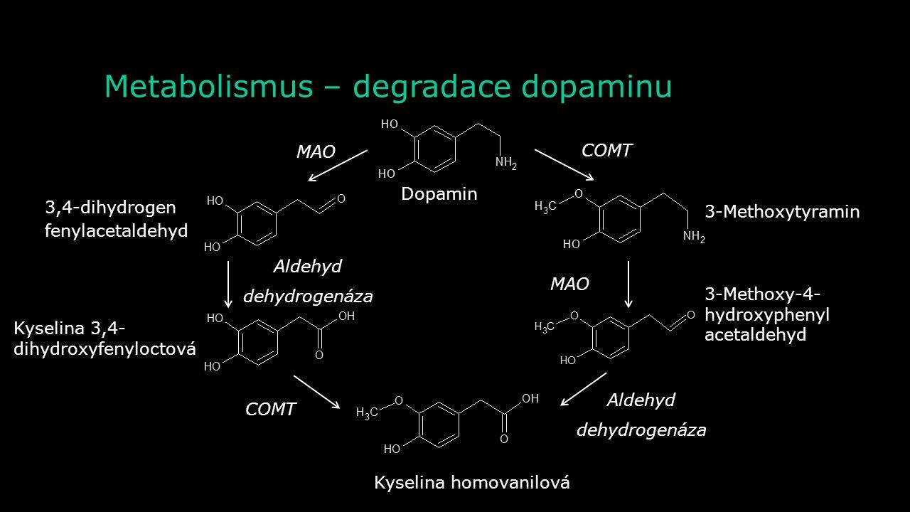 Metabolismus – syntéza (katecholaminů) Tyrozin hydroxyláza L-DOPA Dopamin NoradrenalinAdrenalin Dekarboxyláza L-aromatických aminokyselin Dopamin-β- h
