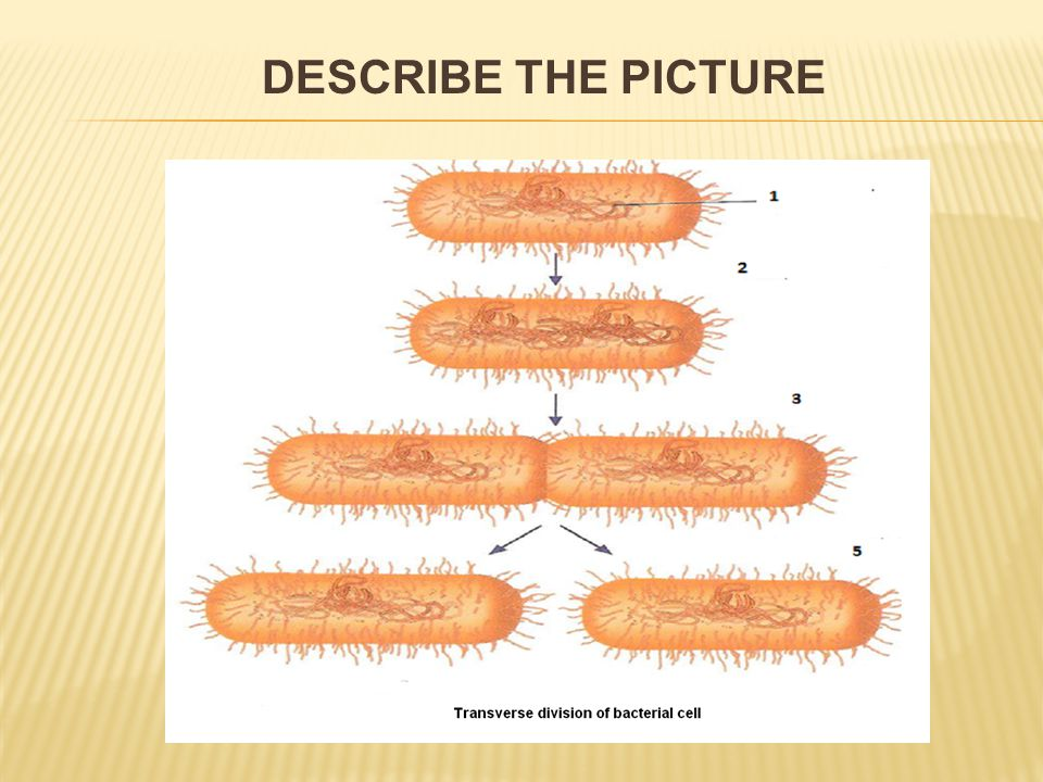  bacteria have lived on the Earth for 3,5 billion years  in the soil, water, air, in bodies of animals and plants  they need energy and a source of carbon:  phototrophic bacteria: they use the solar energy  chemotrophic: they gain the energy from the oxidation of chemical substances  autotrophic: source of carbon from CO 2  heterotrophic: source of carbon from organic substances NUTRITION