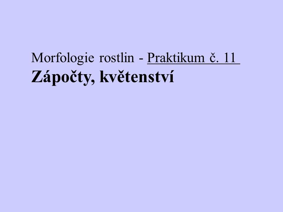 Morfologie rostlin - Praktikum č. 11 Zápočty, květenství