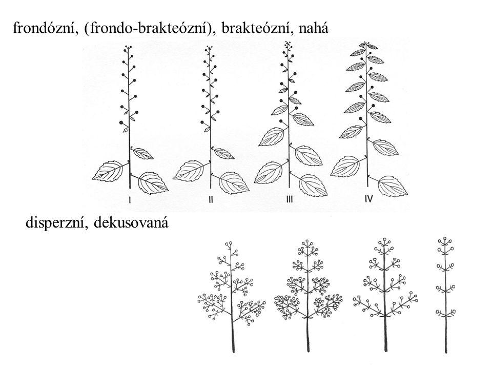 frondózní, (frondo-brakteózní), brakteózní, nahá disperzní, dekusovaná