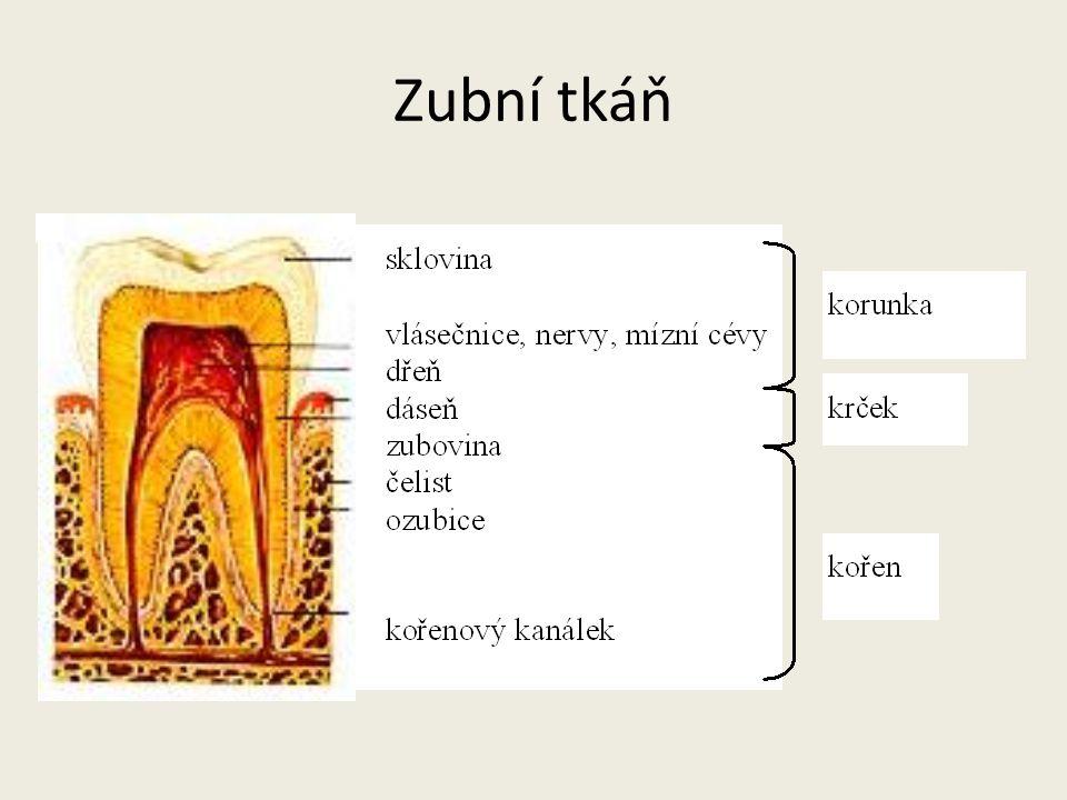 Zubní tkáň