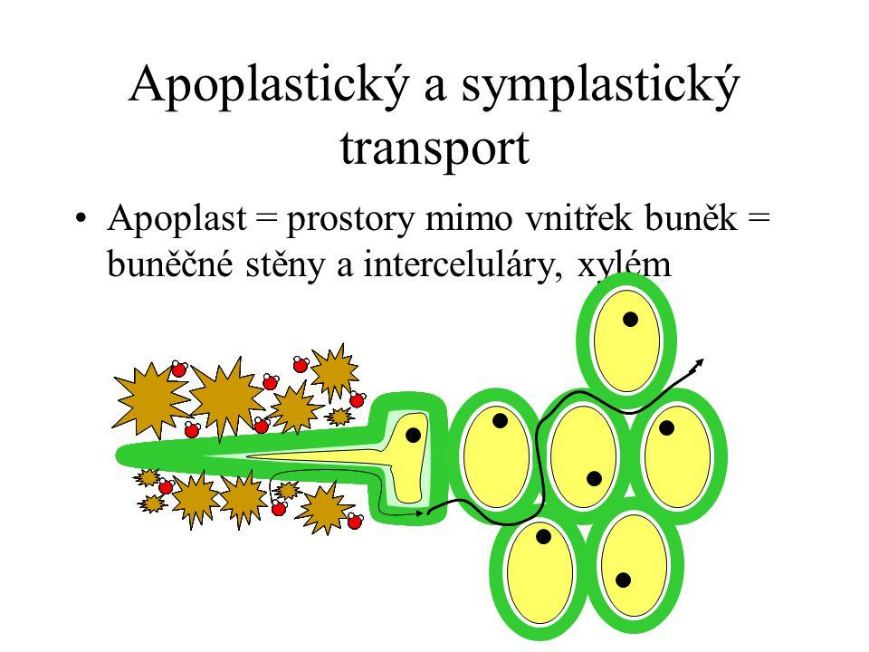 Apoplastický a symplastický transport Apoplast = prostory mimo vnitřek buněk = buněčné stěny a interceluláry, xylém