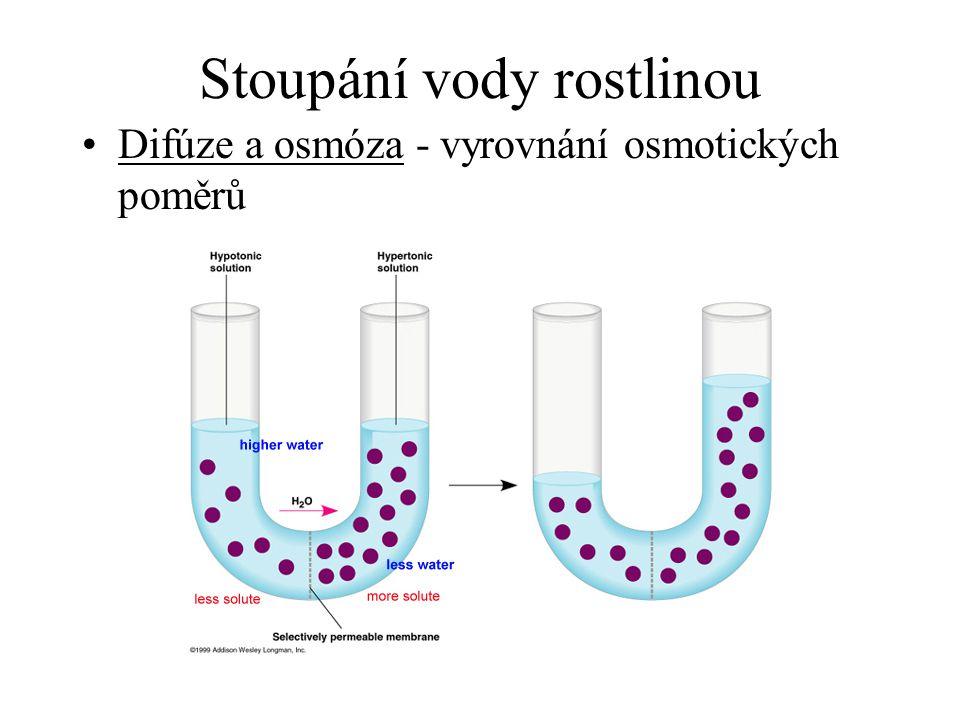 Stoupání vody rostlinou Difúze a osmóza - vyrovnání osmotických poměrů