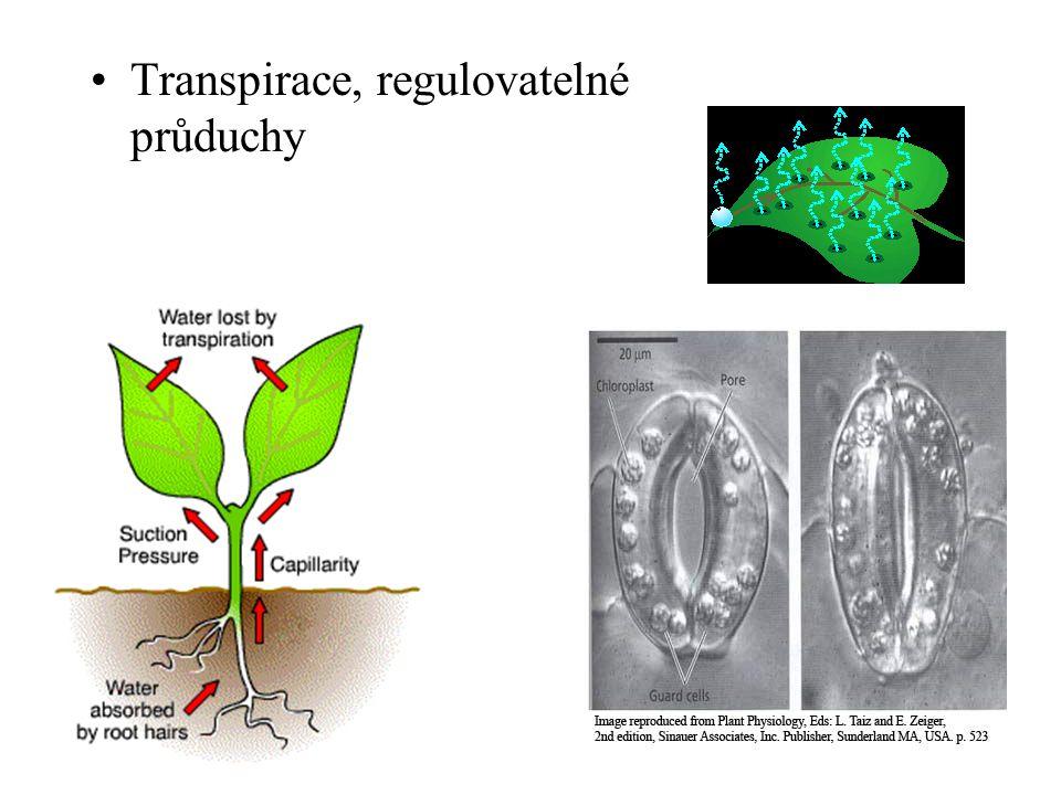 Transpirace, regulovatelné průduchy