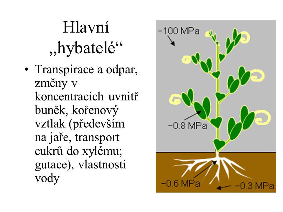 """Hlavní """"hybatelé"""" Transpirace a odpar, změny v koncentracích uvnitř buněk, kořenový vztlak (především na jaře, transport cukrů do xylému; gutace), vla"""