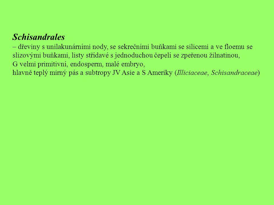 Schisandrales – dřeviny s unilakunárními nody, se sekrečními buňkami se silicemi a ve floemu se slizovými buňkami, listy střídavé s jednoduchou čepelí