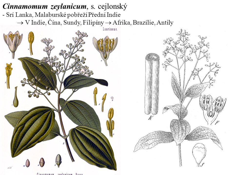 Cinnamomum zeylanicum, s. cejlonský - Srí Lanka, Malaburské pobřeží Přední Indie  V Indie, Čína, Sundy, Filipíny  Afrika, Brazílie, Antily