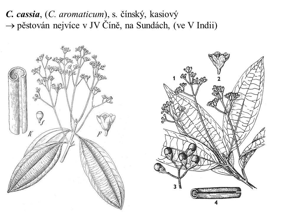 C. cassia, (C. aromaticum), s. čínský, kasiový  pěstován nejvíce v JV Číně, na Sundách, (ve V Indii)