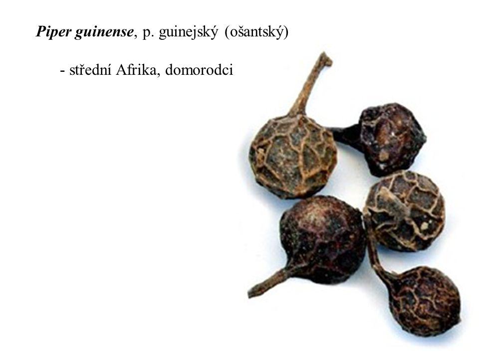 Piper guinense, p. guinejský (ošantský) - střední Afrika, domorodci