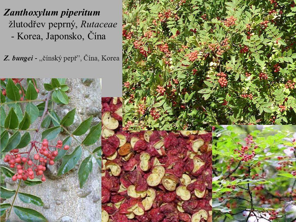 """Zanthoxylum piperitum žlutodřev peprný, Rutaceae - Korea, Japonsko, Čína Z. bungei - """"čínský pepř"""", Čína, Korea"""