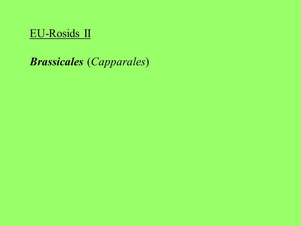 EU-Rosids II Brassicales (Capparales)