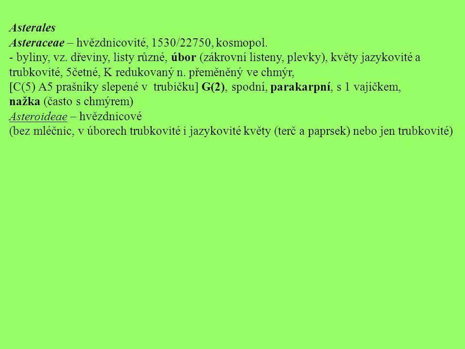 Asterales Asteraceae – hvězdnicovité, 1530/22750, kosmopol. - byliny, vz. dřeviny, listy různé, úbor (zákrovní listeny, plevky), květy jazykovité a tr