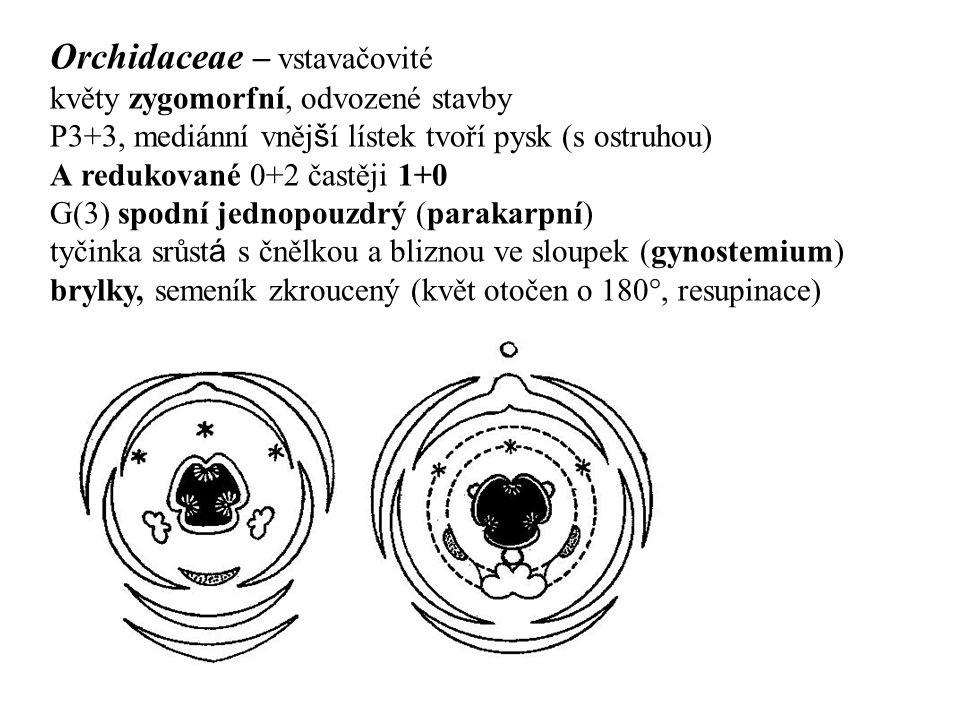 Orchidaceae – vstavačovité květy zygomorfní, odvozené stavby P3+3, mediánní vněj š í lístek tvoří pysk (s ostruhou) A redukované 0+2 častěji 1+0 G(3)