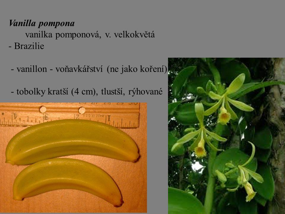 Vanilla pompona vanilka pomponová, v. velkokvětá - Brazilie - vanillon - voňavkářství (ne jako koření) - tobolky kratší (4 cm), tlustší, rýhované