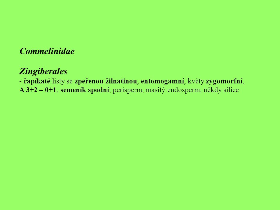 Commelinidae Zingiberales - řapíkaté listy se zpeřenou žilnatinou, entomogamní, květy zygomorfní, A 3+2 – 0+1, semeník spodní, perisperm, masitý endos