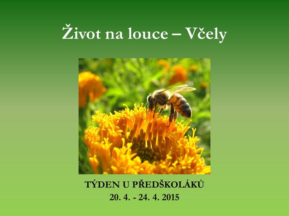 Život na louce – Včely TÝDEN U PŘEDŠKOLÁKŮ 20. 4. - 24. 4. 2015
