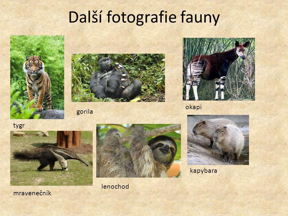 Další fotografie fauny tygr gorila okapi mravenečník lenochod kapybara