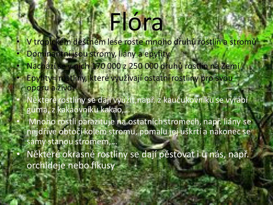 Flóra V tropickém deštném lese roste mnoho druhů rostlin a stromů Dominantní jsou stromy, liány a epyfity Nachází se v nich 170 000 z 250 000 druhů rostlin na Zemi Epyfity= rostliny, které využívají ostatní rostliny pro svou oporu a život Některé rostliny se dají využít,např.