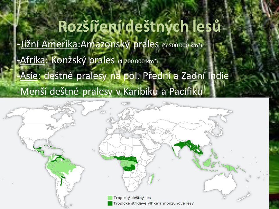 Rozšíření deštných lesů - Jižní Amerika:Amazonský prales (5 500 000 km²) -Afrika: Konžský prales (1 700 000 km²) -Asie: deštné pralesy na pol. Přední