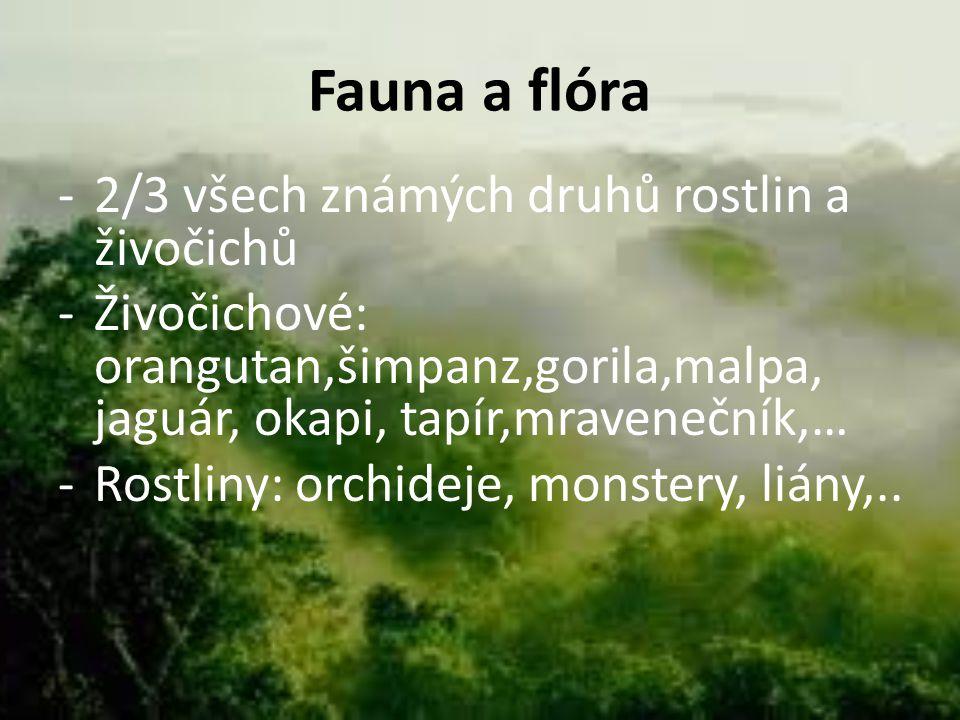 Fauna a flóra -2/3 všech známých druhů rostlin a živočichů -Živočichové: orangutan,šimpanz,gorila,malpa, jaguár, okapi, tapír,mravenečník,… -Rostliny: orchideje, monstery, liány,..
