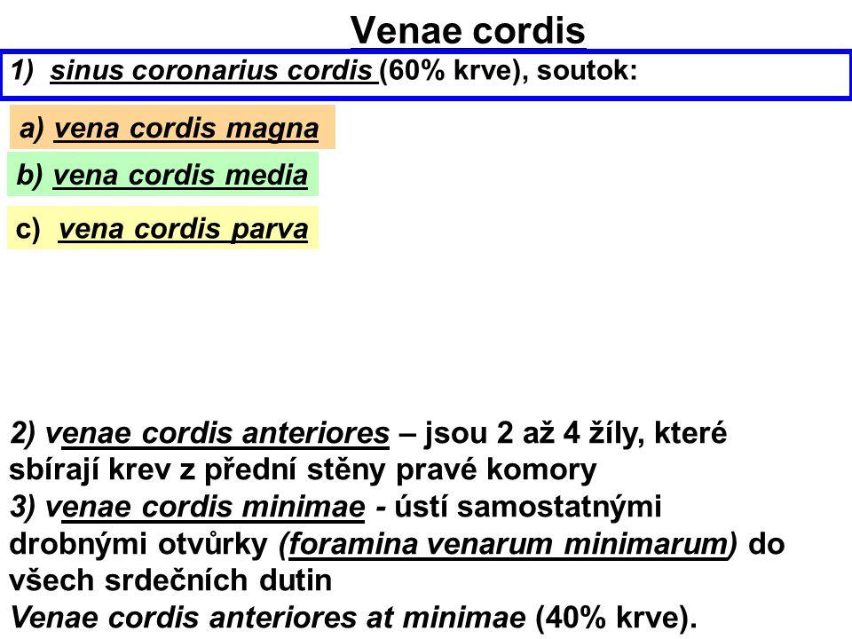 Venae cordis 1) sinus coronarius cordis (60% krve), soutok: 2) venae cordis anteriores – jsou 2 až 4 žíly, které sbírají krev z přední stěny pravé kom