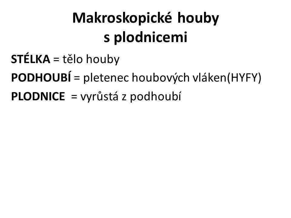 STÉLKA = tělo houby PODHOUBÍ = pletenec houbových vláken(HYFY) PLODNICE = vyrůstá z podhoubí Makroskopické houby s plodnicemi