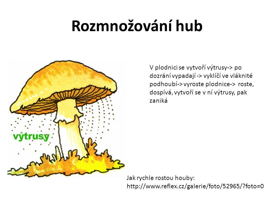 Rozmnožování hub V plodnici se vytvoří výtrusy-> po dozrání vypadají -> vyklíčí ve vláknité podhoubí-> vyroste plodnice-> roste, dospívá, vytvoří se v
