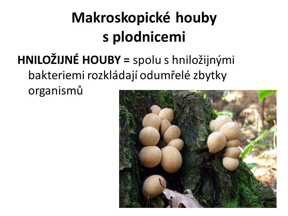 HNILOŽIJNÉ HOUBY = spolu s hniložijnými bakteriemi rozkládají odumřelé zbytky organismů Makroskopické houby s plodnicemi