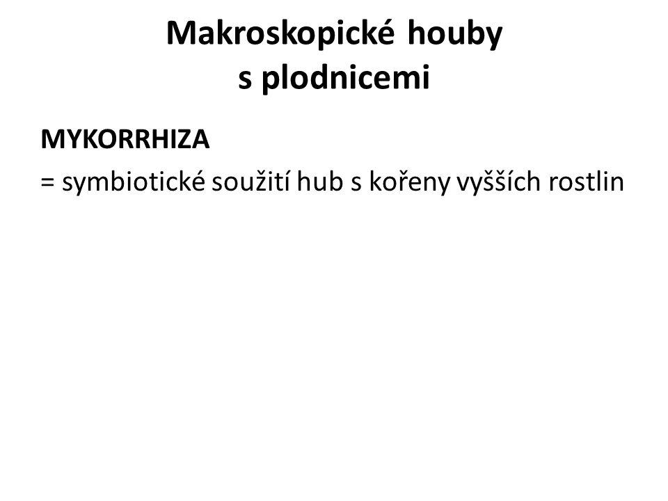 MYKORRHIZA = symbiotické soužití hub s kořeny vyšších rostlin Makroskopické houby s plodnicemi