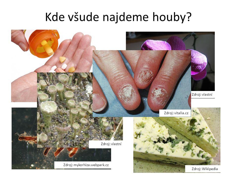 Kde všude najdeme houby? Zdroj: mtbs.cz Zdroj: mykorhiza.webpark.cz Zdroj: vlastní Zdroj: Wikipedia Zdroj: vlastní Zdroj: vitalia.cz