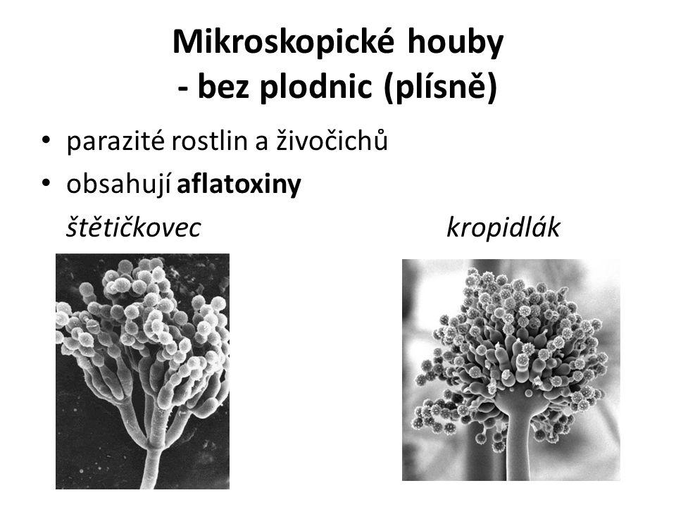 Mikroskopické houby - bez plodnic (plísně) parazité rostlin a živočichů obsahují aflatoxiny štětičkoveckropidlák