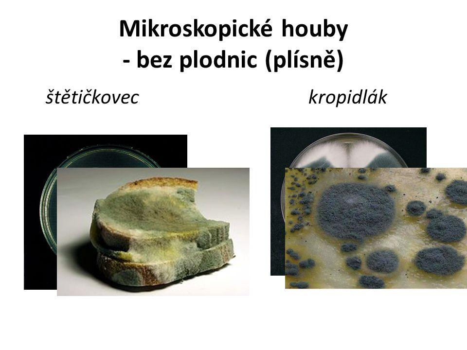 Mikroskopické houby - bez plodnic (plísně) štětičkoveckropidlák