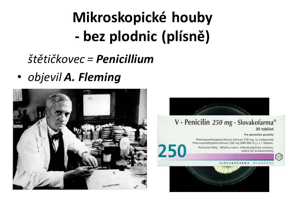 Mikroskopické houby - bez plodnic (plísně) štětičkovec = Penicillium objevil A. Fleming