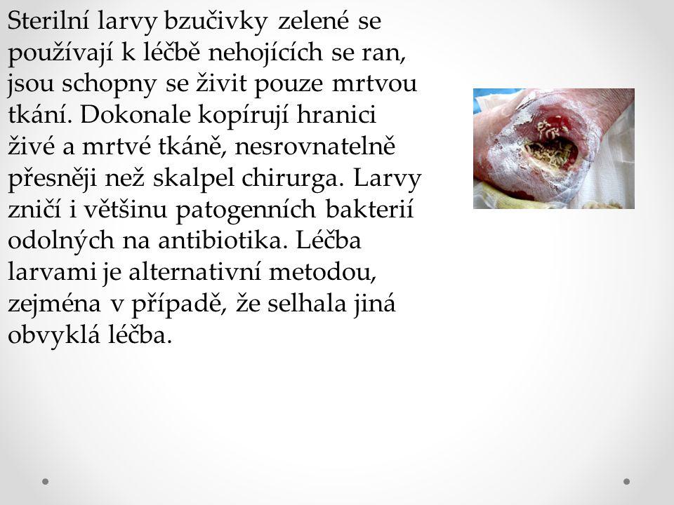 Sterilní larvy bzučivky zelené se používají k léčbě nehojících se ran, jsou schopny se živit pouze mrtvou tkání. Dokonale kopírují hranici živé a mrtv
