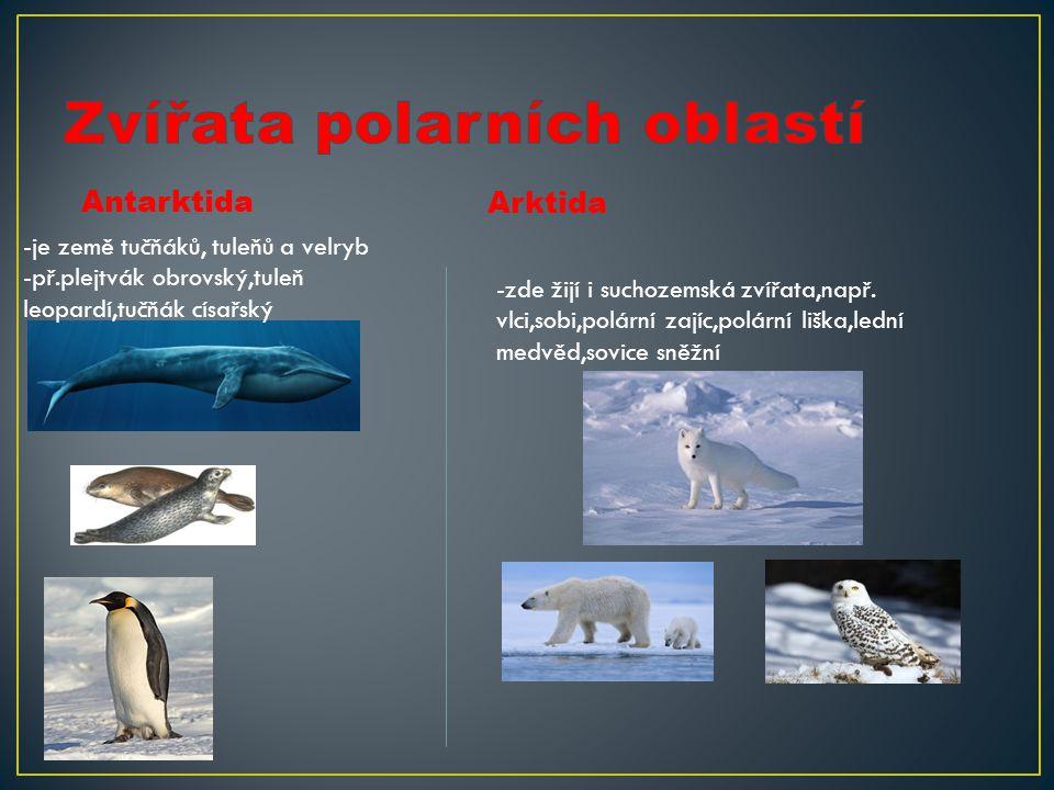 Antarktida Arktida -je země tučňáků, tuleňů a velryb -př.plejtvák obrovský,tuleň leopardí,tučňák císařský -zde žijí i suchozemská zvířata,např. vlci,s