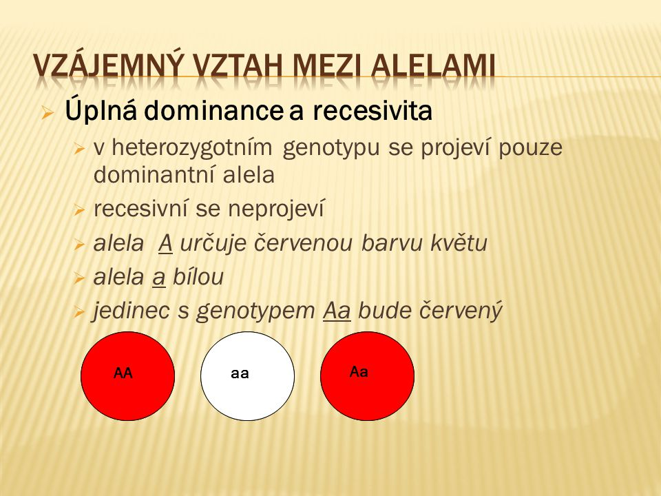  Úplná dominance a recesivita  v heterozygotním genotypu se projeví pouze dominantní alela  recesivní se neprojeví  alela A určuje červenou barvu