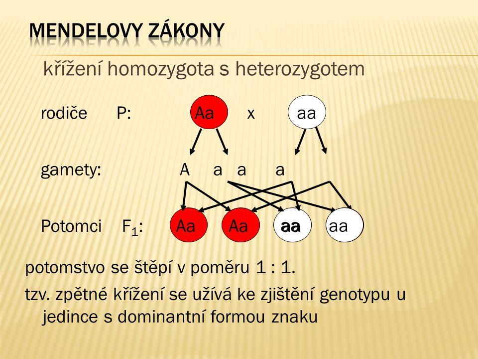 křížení homozygota s heterozygotem rodiče P: gamety: Potomci F 1 : Aa x aa A a aa Aa aa potomstvo se štěpí v poměru 1 : 1. tzv. zpětné křížení se užív