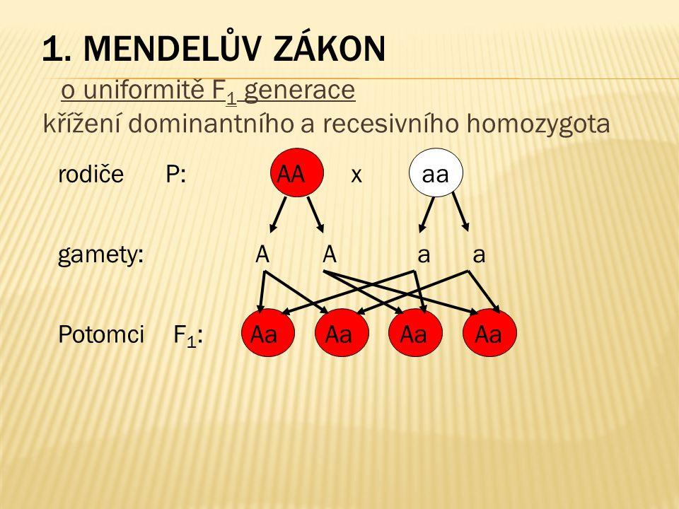 1. MENDELŮV ZÁKON o uniformitě F 1 generace křížení dominantního a recesivního homozygota rodiče P: gamety: Potomci F 1 : AA x aa A A a a Aa