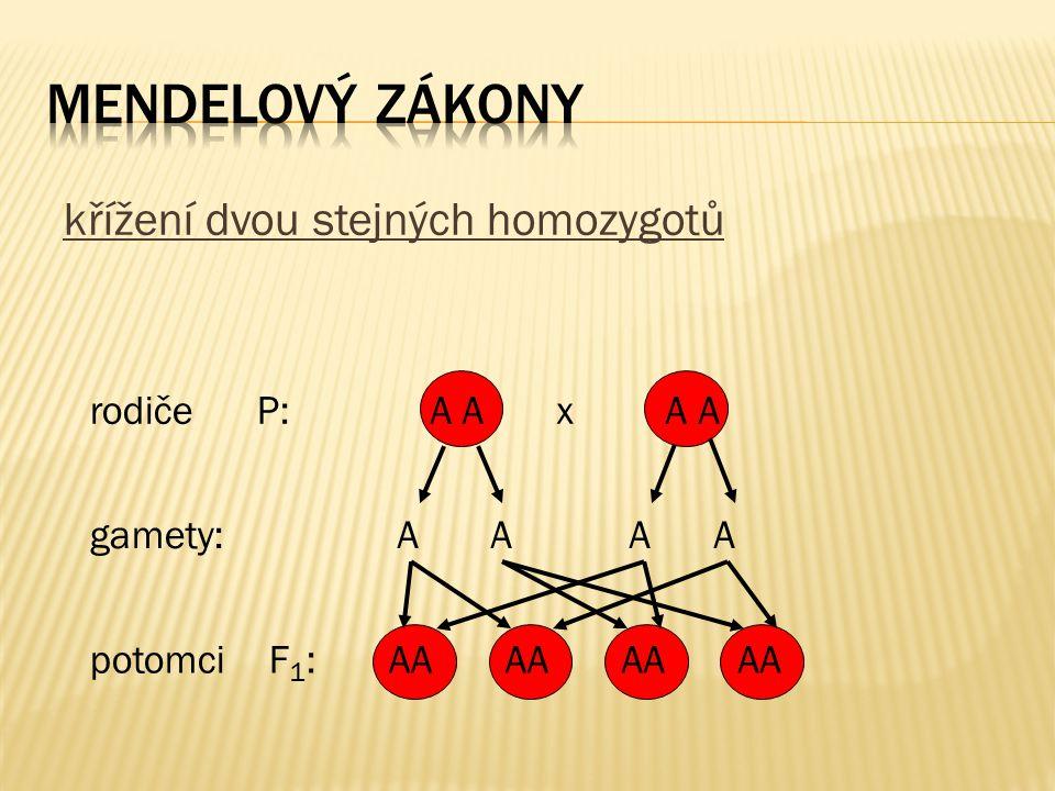 křížení dvou stejných homozygotů rodiče P: gamety: potomci F 1 : A A x A A A A AA AA