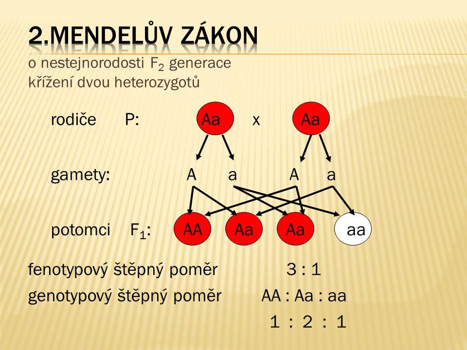 o nestejnorodosti F 2 generace křížení dvou heterozygotů rodiče P: gamety: potomci F 1 : Aa x Aa A a Aa AAAa aa fenotypový štěpný poměr 3 : 1 genotypo