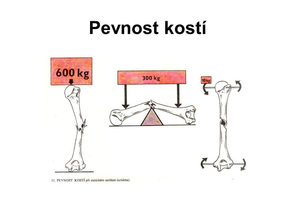 Nervové zásobení kosti periost je bohatě inervován (bolestivost při obražení) tenká nervová vlákna procházejí podél cév až do Haversových kanálků (pravděpodobně zásobují jen cévy )