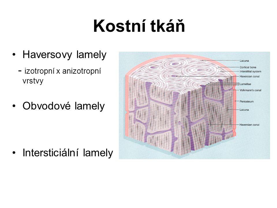 Izotropní x anizotropní vrstvy Kostní tkáň