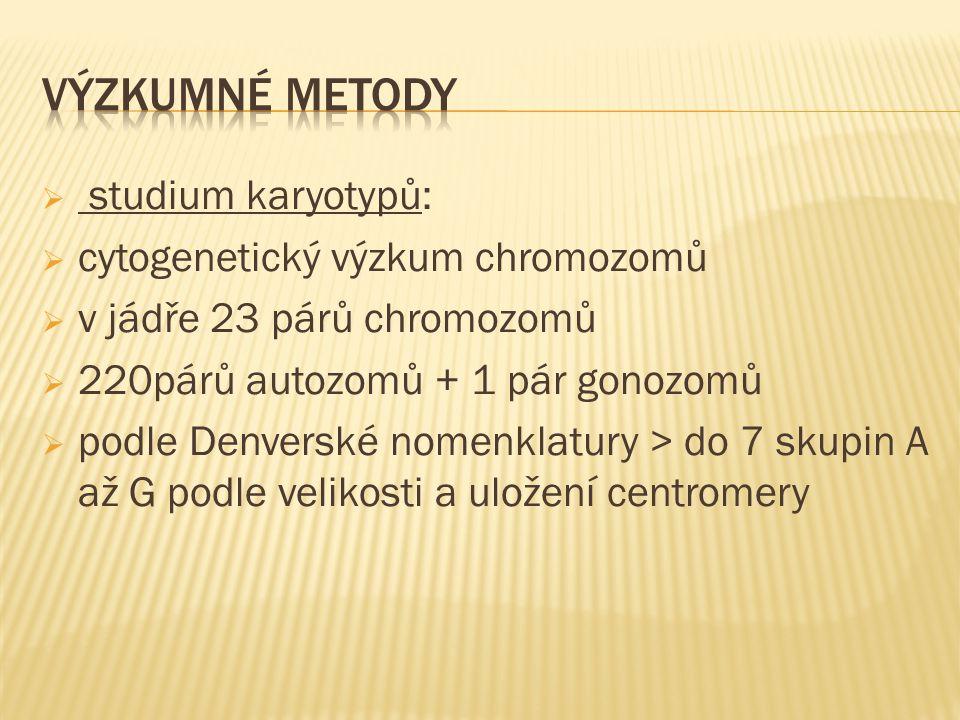  studium karyotypů:  cytogenetický výzkum chromozomů  v jádře 23 párů chromozomů  220párů autozomů + 1 pár gonozomů  podle Denverské nomenklatury > do 7 skupin A až G podle velikosti a uložení centromery