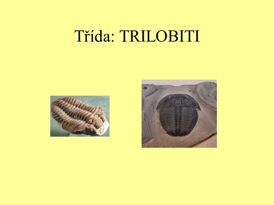Dělení členovců Třída: trilobiti Třída: pavoukovci Třída: korýši Třída: hmyz