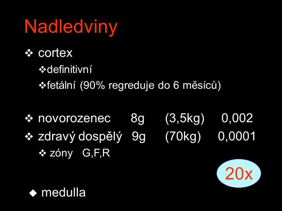 Nadledviny  cortex  definitivní  fetální (90% regreduje do 6 měsíců)  novorozenec 8g(3,5kg)0,002  zdravý dospělý 9g(70kg) 0,0001  zóny G,F,R 20x