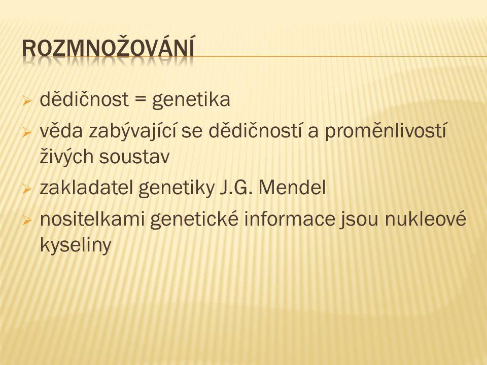  dědičnost = genetika  věda zabývající se dědičností a proměnlivostí živých soustav  zakladatel genetiky J.G. Mendel  nositelkami genetické inform